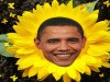 obama sunflower