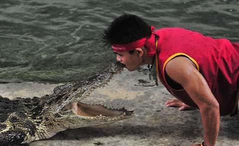 Kissing the Crocodile