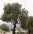 Littman-051013-Tree