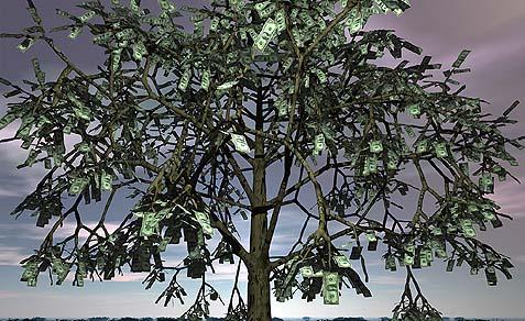 money-tree.jpeg