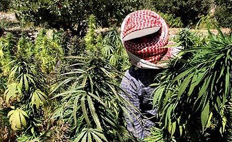 Lebanese-Farmer