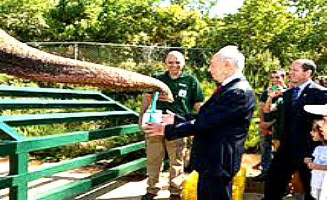 An elephant at the Jerusalem Biblical Zoo gives President a gift