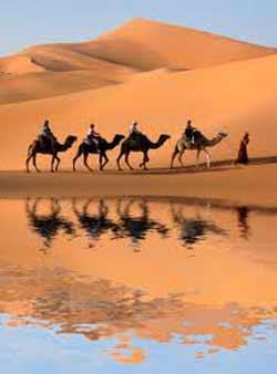 Bodenheim-101113-Camels