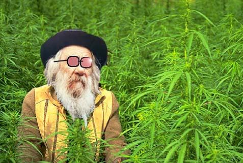 weed rabbi