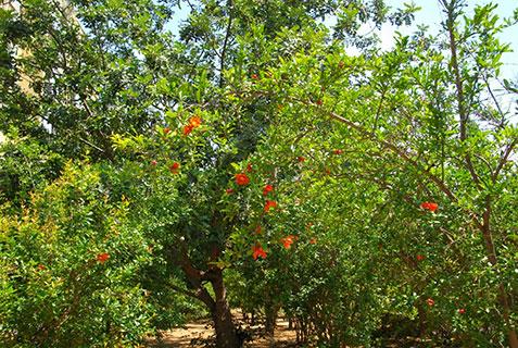 Agam-011714-Tree