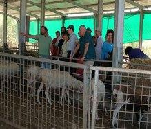 At the Dotam Farm