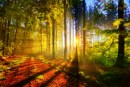 sunlightthroughthetrees.jpg