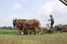 Einhorn-062714-Horses