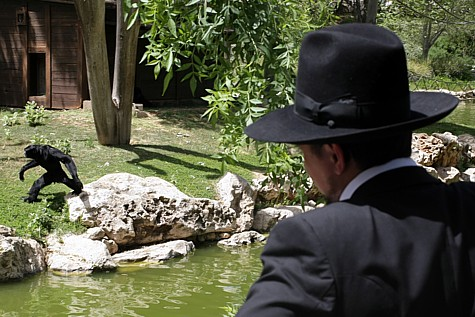 Man and Monkey at Jerusalem's Biblical Zoo.