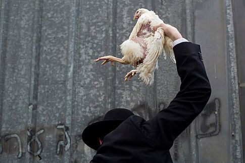 Is that a chicken or Tzipi Livni ready to be sacrificed?