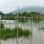 """""""Jena-Experiment"""" zu Biodiversität: Studie belegt, dass Pflanzenvielfalt die Auswirkungen von Überschwemmungen mildert"""