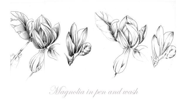 Drawing Flowers book - Jill Winch SBA