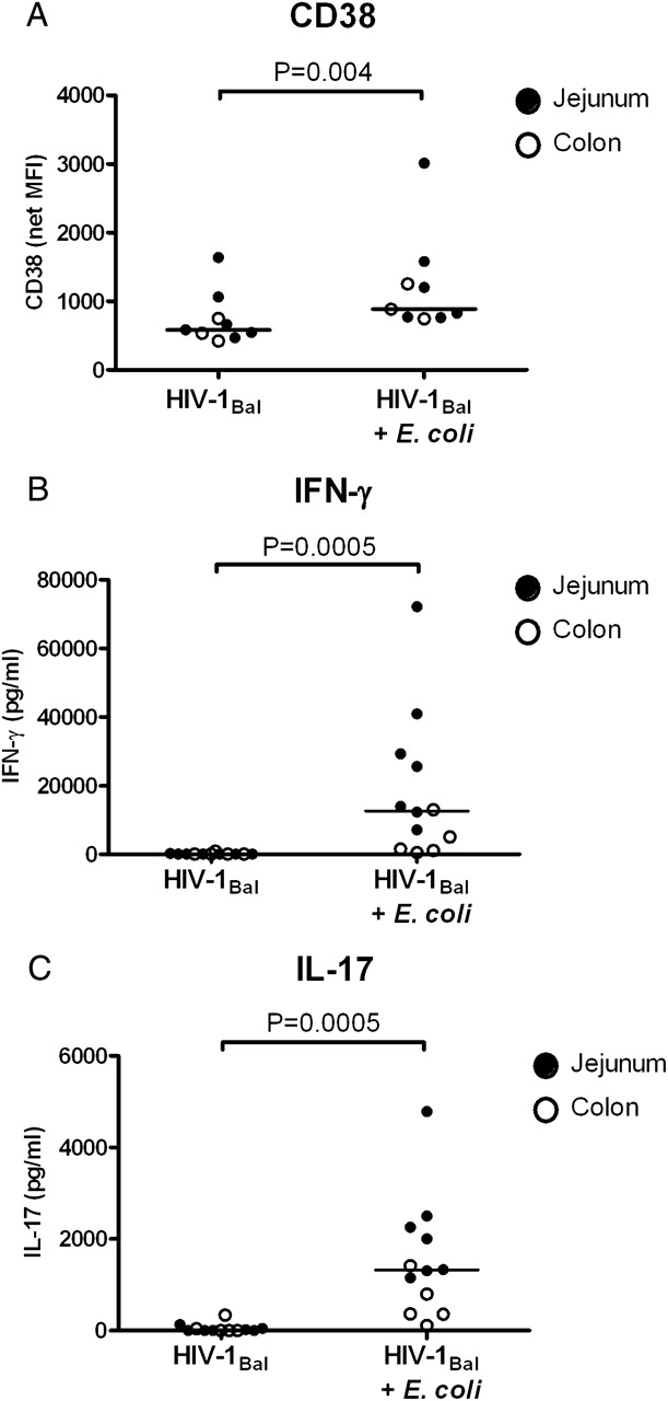 HIV-1 Infection of Human Intestinal Lamina Propria CD4+ T Cells In