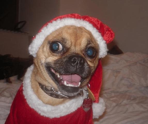 Roxy Claus!