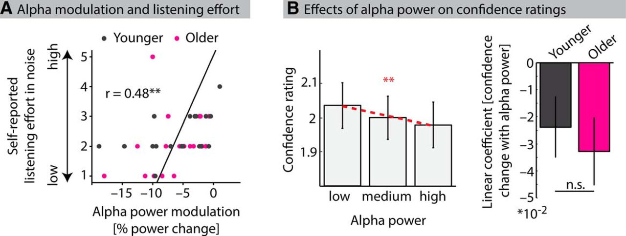 Neural Alpha Dynamics in Younger and Older Listeners Reflect