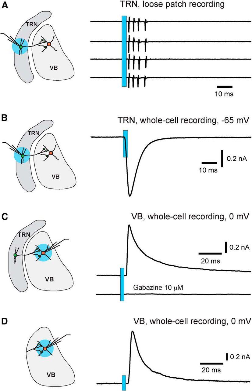 mouse diagram