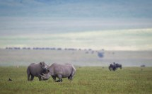 During Trip Ngorongoro Serrengeti at Ngorongoro (TZA); Tanzania. February 25, 2016. Photo : Christophe JOBIC / www.jobic.com