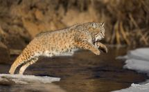 Animals of Montana 2013 Bozeman MT USA
