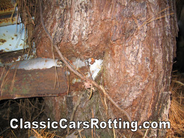 Wallpaper Removal Sioux Falls 19 Unidentifiable Tree Junk Car Removal Get An Offer