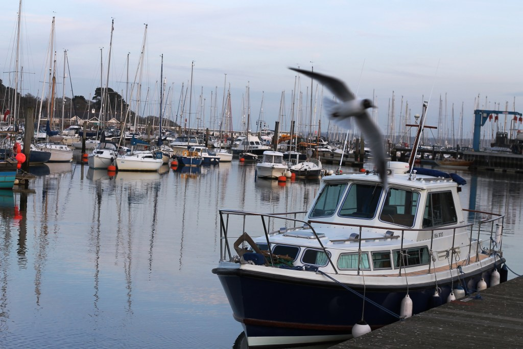 A local takes flight at Lymington Quayside (Johanna Payton)