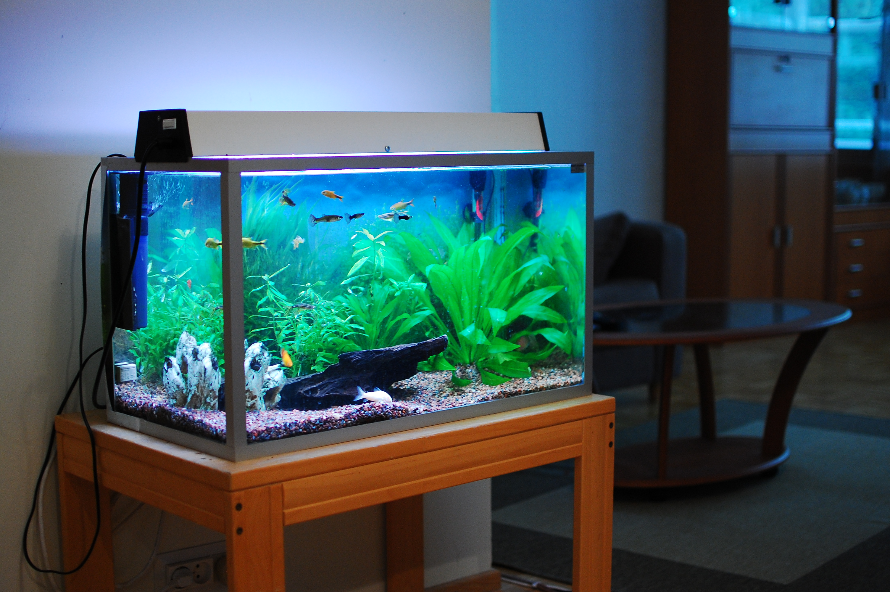 Fish Tank Freshwater Aquarium Talk