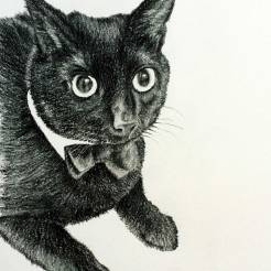Charlie-Colored-Pencil-Pet-Cat-Portrait-Drawing-by-John-Gordon