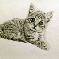 RedditGetsDrawn-Kitten-Pet-Portrait-Drawing-by-John-Gordon