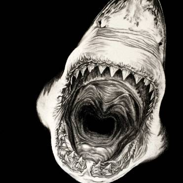 Shark-Charcoal-Drawing-by-John-Gordon