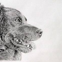 Spike-Pet-Dog-Memorial-Portrait-Drawing-by-John-Gordon