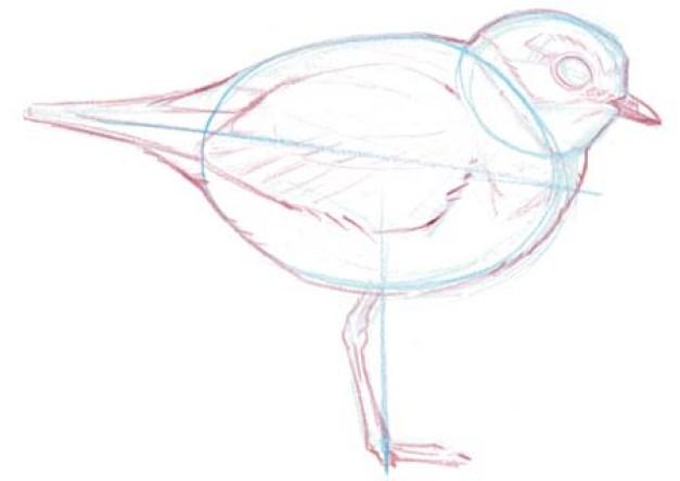 plover shape