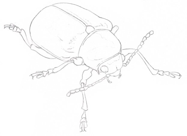 Line Drawing Insects : How to draw insects iridescence john muir laws