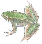 Build up the mottled green with another coat of  watercolor.