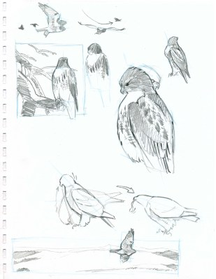 After the bird flies away, add habitat or landscape backgrounds around some of the birds. Consider the composition of each section in itself. Notice that the birds are not centered in the compositions and break the frame.