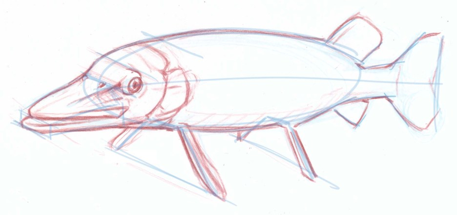 Use the guide lines as a platform for drawing the details of the fish.