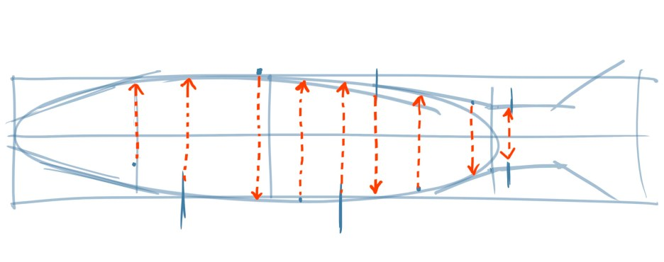Also visualize how the fins overlap on the top and bottom edges. Where is the dorsal fin relative to the ventral fin?