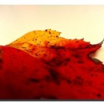 A Leaf in Autumn