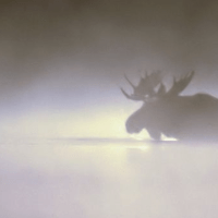 Design Thinking: See the Moose Through the Mist