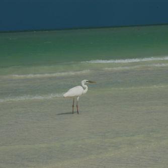 Isla Holbox Mexiko - Erfahrungsbericht 8