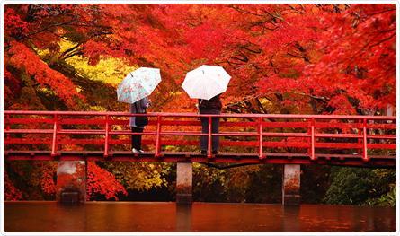 Japan Fall Colors Wallpaper 紅葉小常識 秋 賞紅葉特集 訪問地精選 Jr East