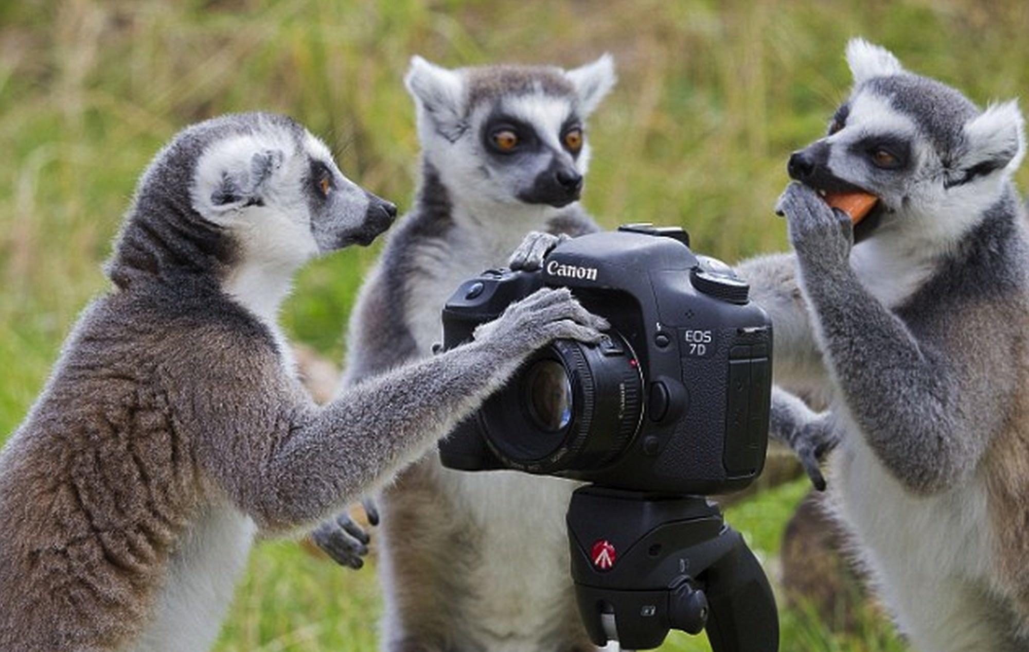 Site de rencontre photographe