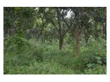 Tanah Luas Berkualitas Untuk Perkebunan, Peternakan dan Investasi
