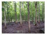 Dijual hutan jati siap panen (owner directly)