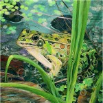 "Frog in a Bog - Mayo Clinic    COMMISSIONPaper Collage on Wood Panel30""x 30"""