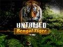 Untamed-Bengal-Tiger