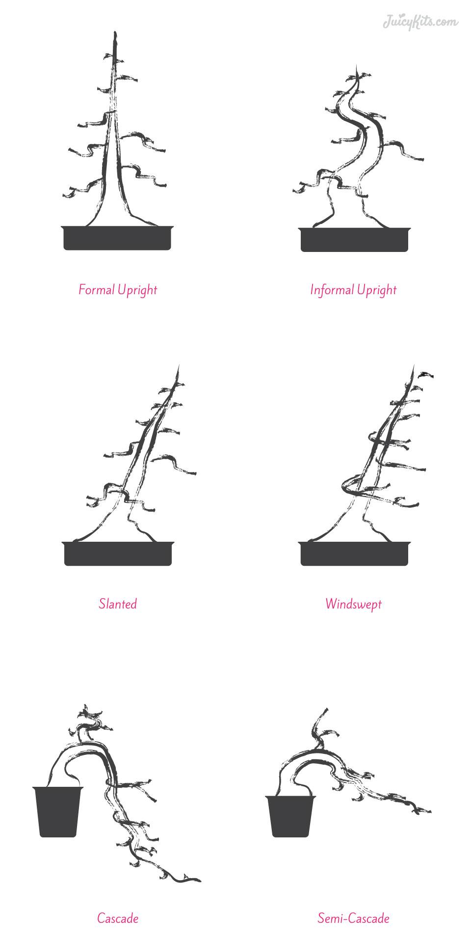 wiring bonsai basics