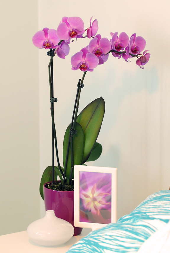 Orchid Photos | Repotting Orchid