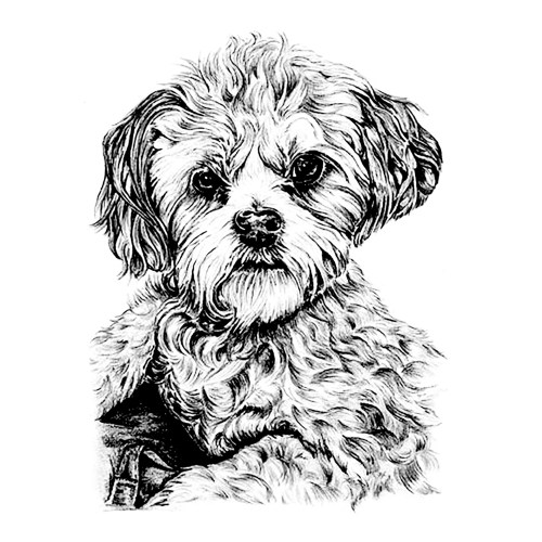 Medium Crop Of Dog Coloring Pages For Adults
