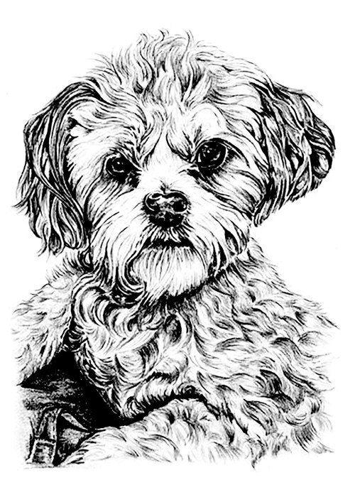 Medium Of Dog Coloring Pages For Adults