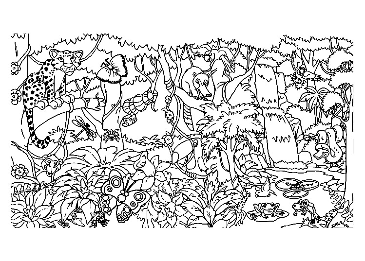 Jungle  Forest - Coloring Pages for Adults