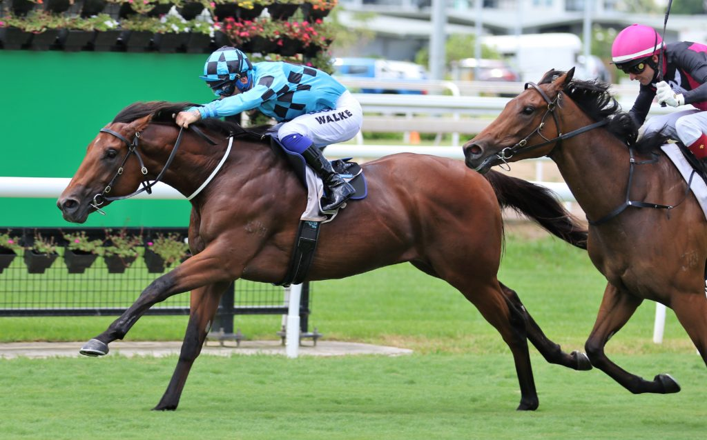 Dubious Out To Remain Unbeaten In Magic Millions Classic